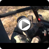 Texas Mule Deer Video